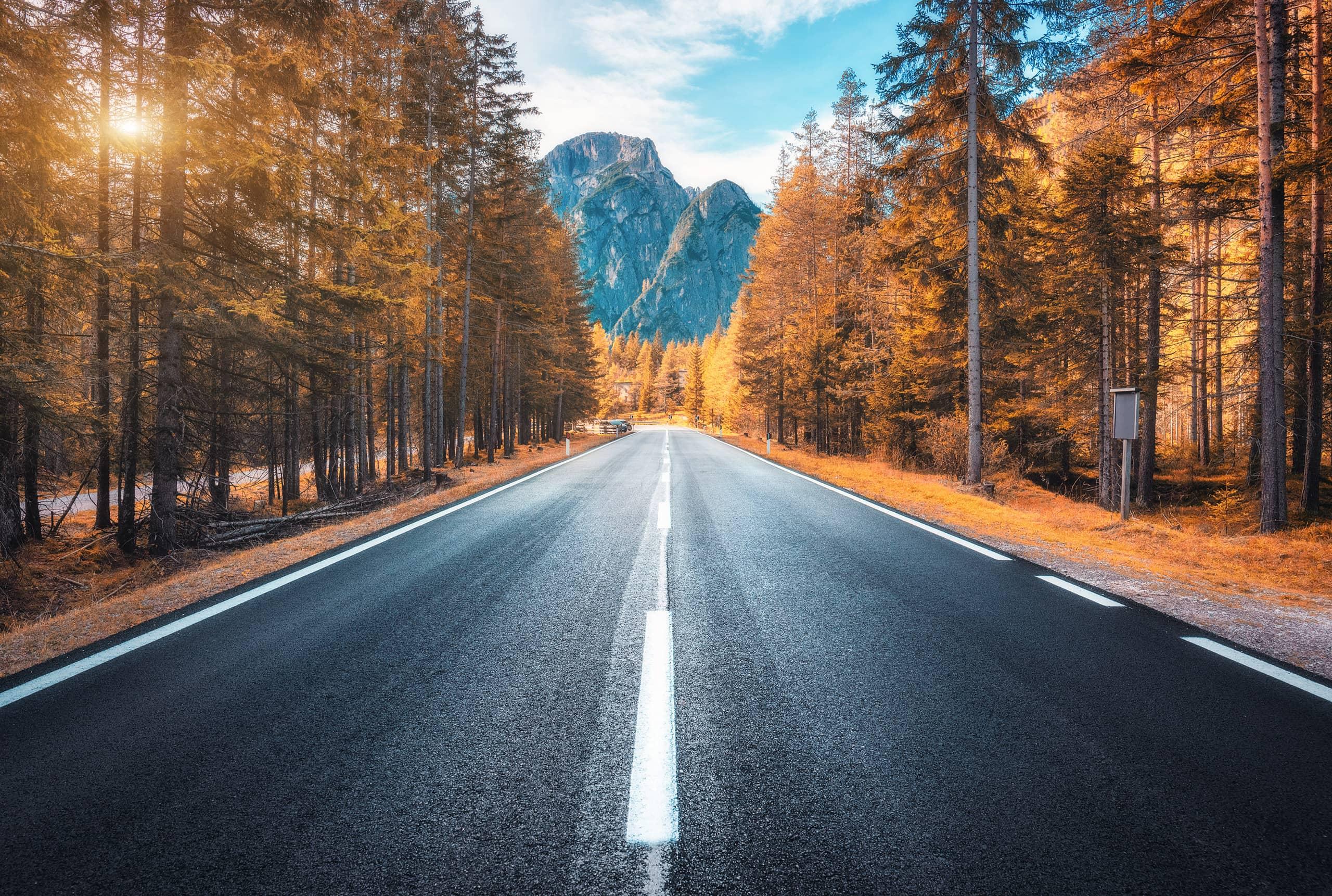 Landevei gjennom skogen