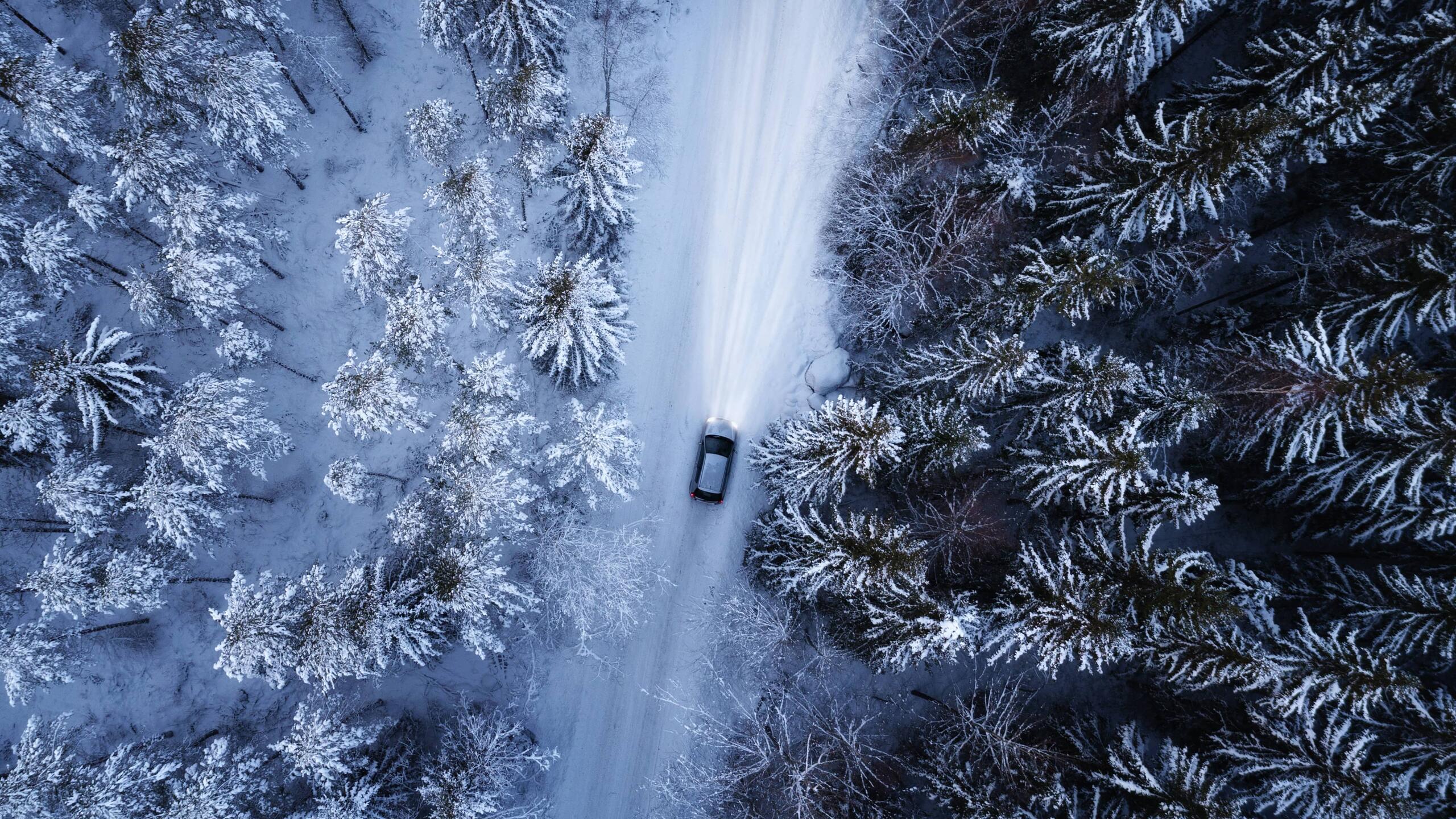 Vei i skogen om vinteren med snødekte trær